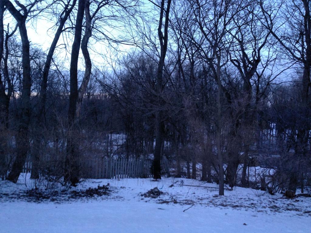 Evening winter silhouette