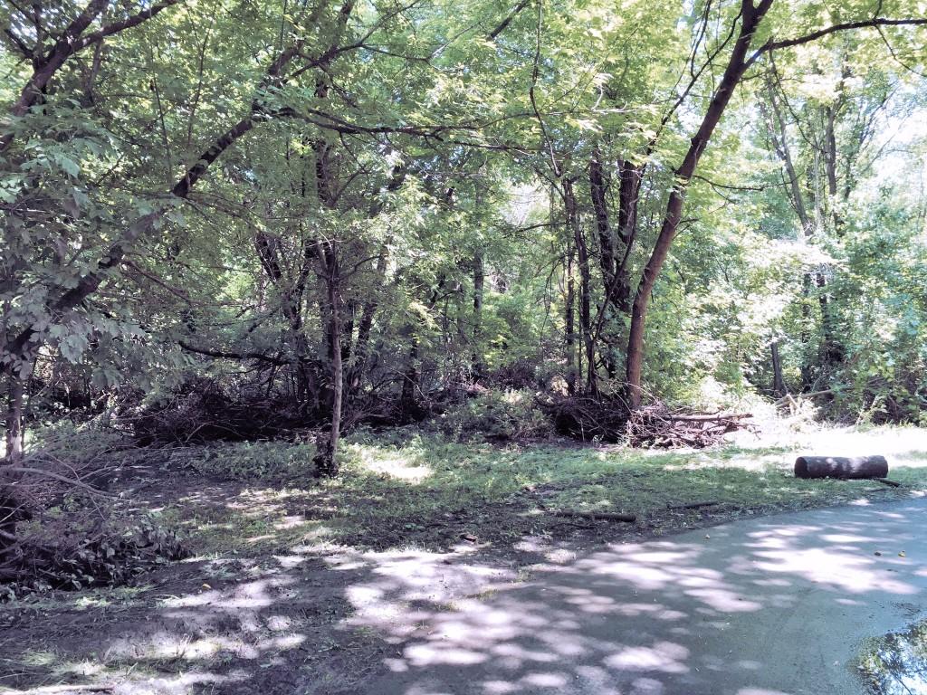 North Walnut Creek Tree Debris